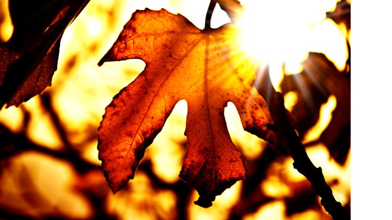 Осенние цвета — как изменить цвет в вашей квартире декор