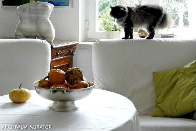 Белая гостиная или такая планировка гостиной мы советуем, как ее хорошо обустроить