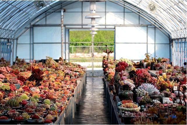 Строительство садовой теплицы для выращивания овощей