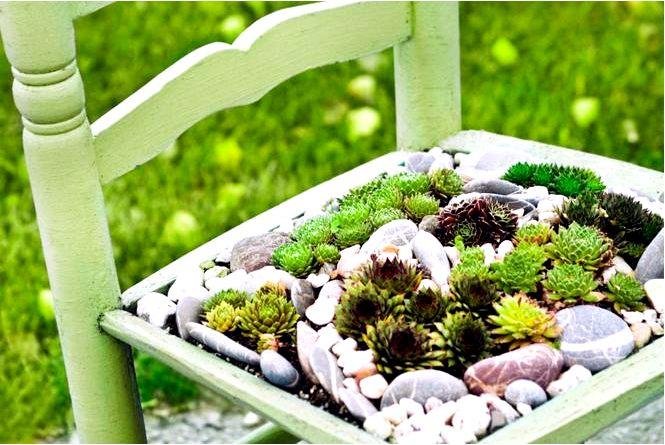 Подушки-многолетники — самые популярные виды и их использование в саду