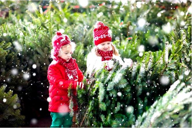 Елка на рождество, ель, пихта или сосна