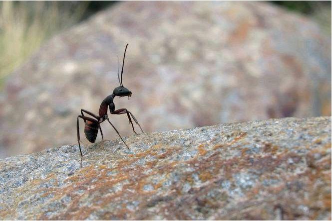 Что не любят муравьи. эффективные средства от муравьев в доме и саду