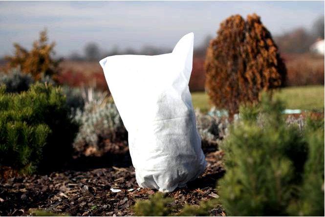 Что покрыть зимние заводы для зимних растений