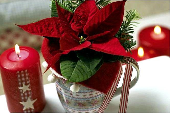 Рождественские звездные украшения с пуансетиями