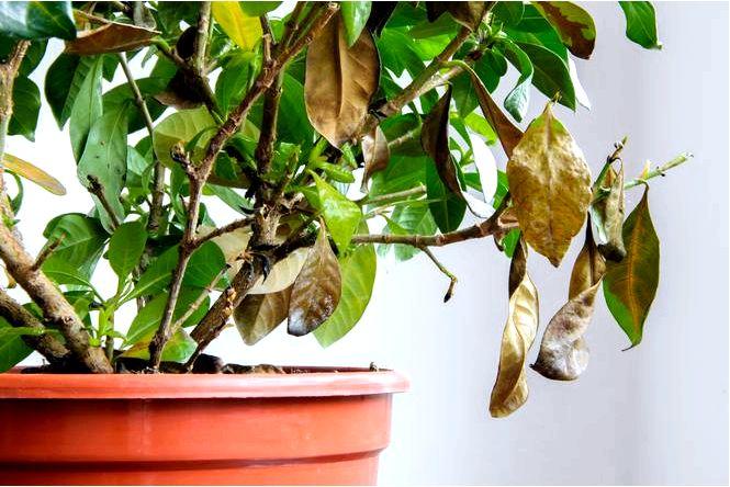 Домашние средства от паразитов и болезней комнатных растений