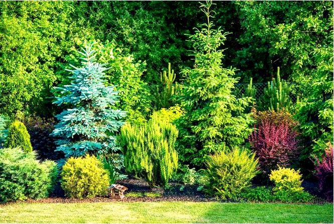 Деревья и кустарники для сада — лиственные и хвойные деревья и кустарники на выбор