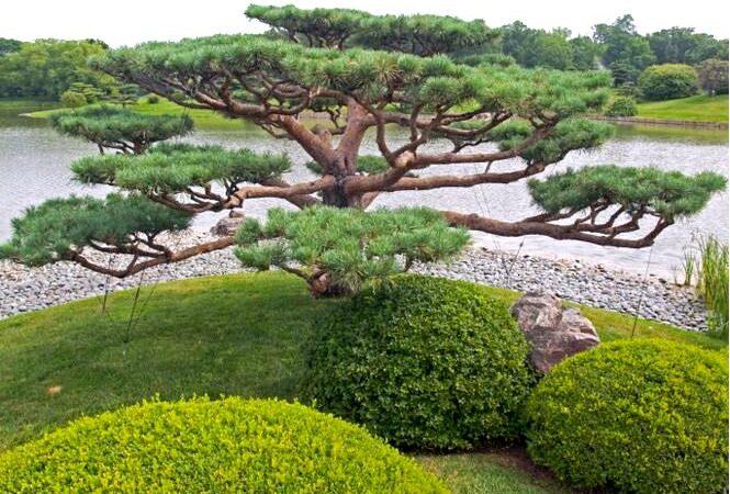 Бонсай из садовых растений