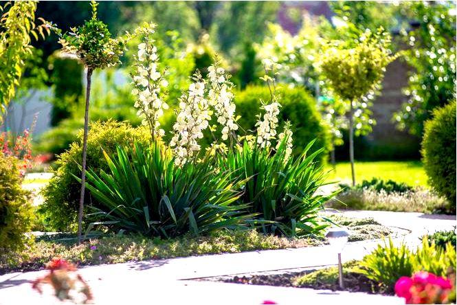 Долгожители цветущие многолетники — залог красивого украшения в саду