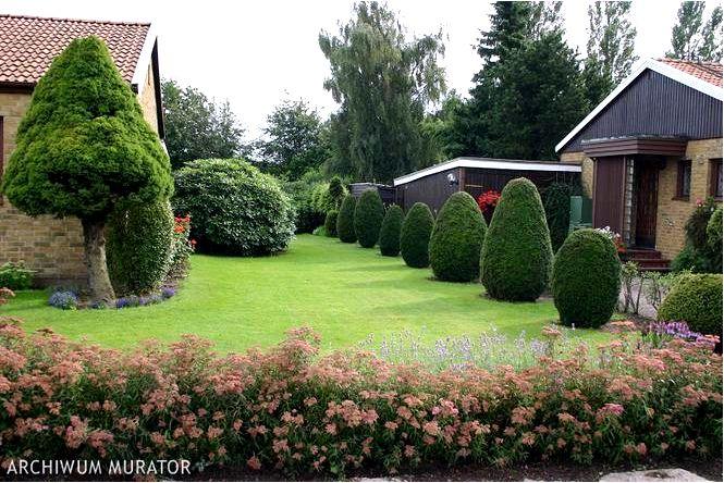 Формирование растений, или как формировать растения в саду