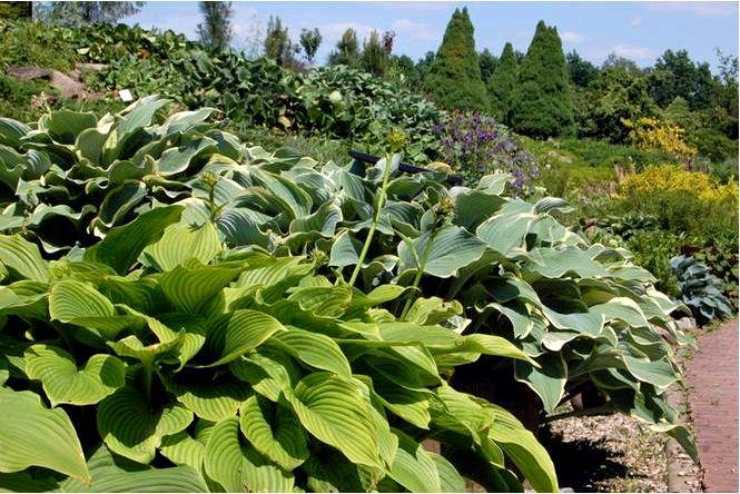 Веселые растения для тенистого сада