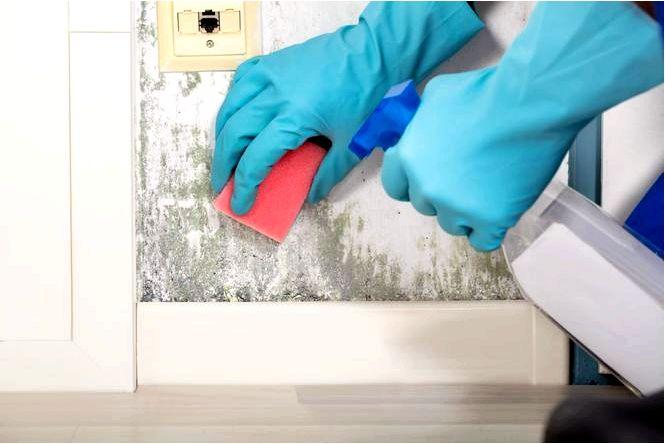 Грибок и плесень на стене в квартире причины и удаление
