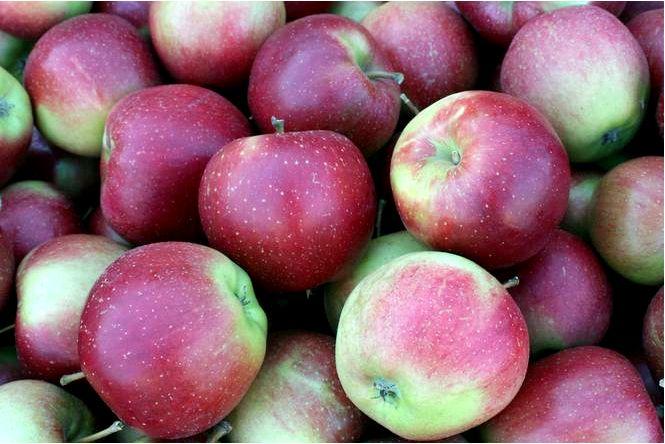 Домашняя яблоня; элиза; malus domestica; элиза