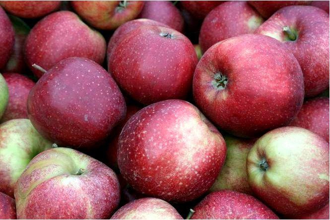 Домашняя яблоня; джонаголд декоста; malus domestica; джонаголд декоста