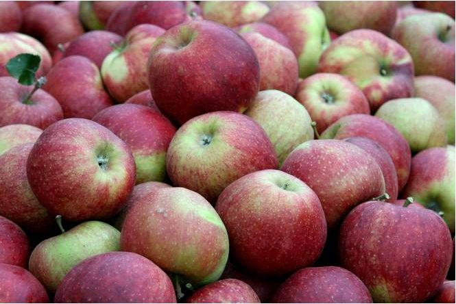 Домашняя яблоня; джонагоред супра; malus domestica; джонагоред супра