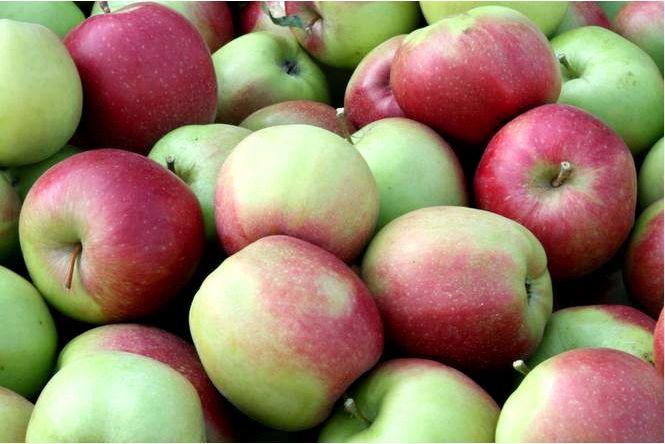 Домашняя яблоня; лигол; malus domestica; лигол