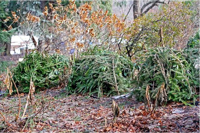 Как и чем защитить растения в саду от зимнего укрытия растений