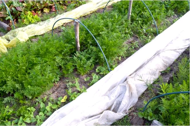 Как уберечь растения в саду от весенних заморозков