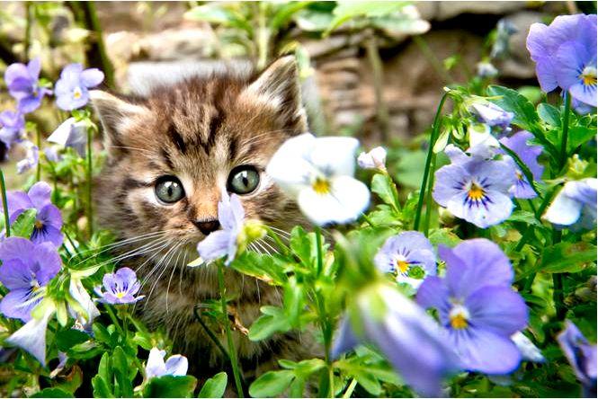 Как отпугнуть кошек из сада чем напугать кошек проверенные способы