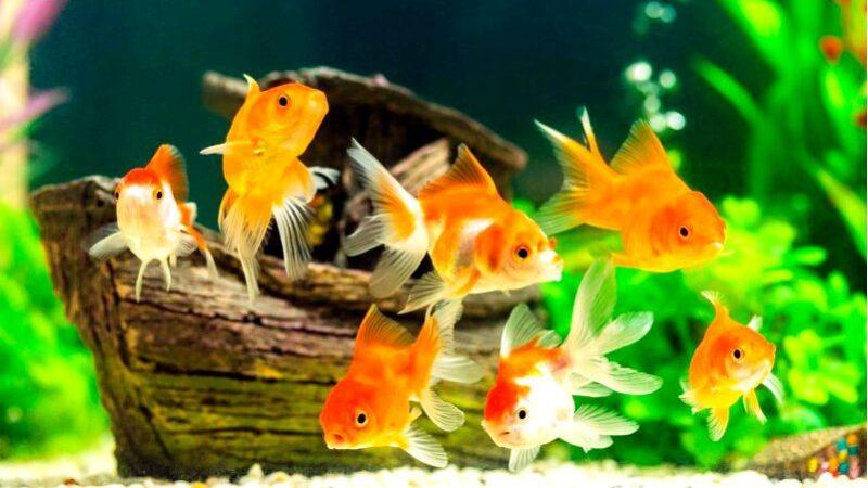 Удивительное украшение интерьера-как украсить красивый аквариум