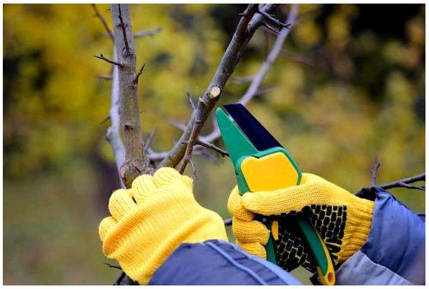 Какие деревья нельзя обрезать осенью